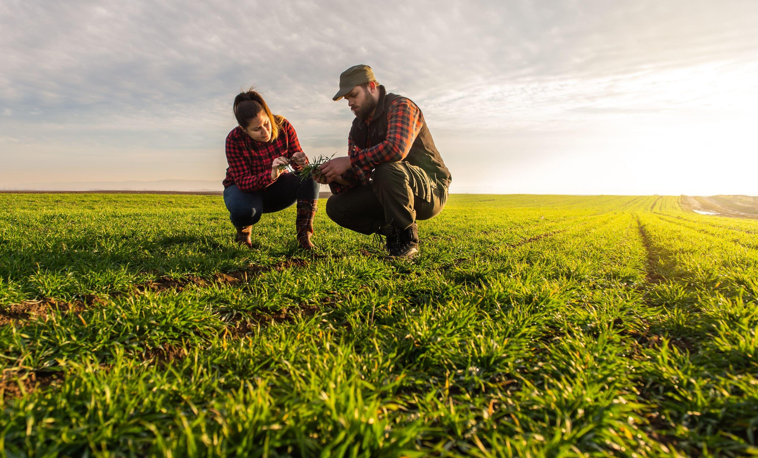 agriculteur éleveur soutenu par Initiative Essonne